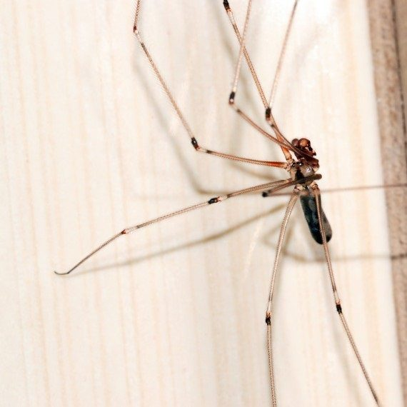 Spiders, Pest Control in Clapham, SW4. Call Now! 020 8166 9746
