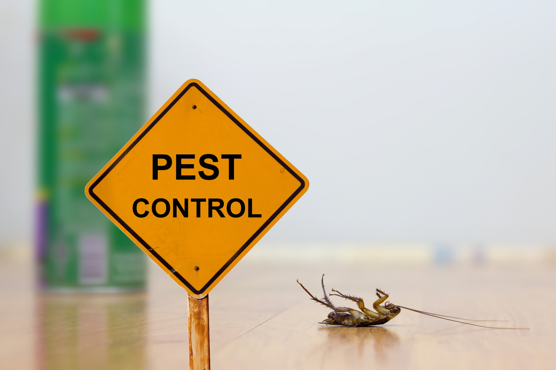 24 Hour Pest Control, Pest Control in Clapham, SW4. Call Now 020 8166 9746