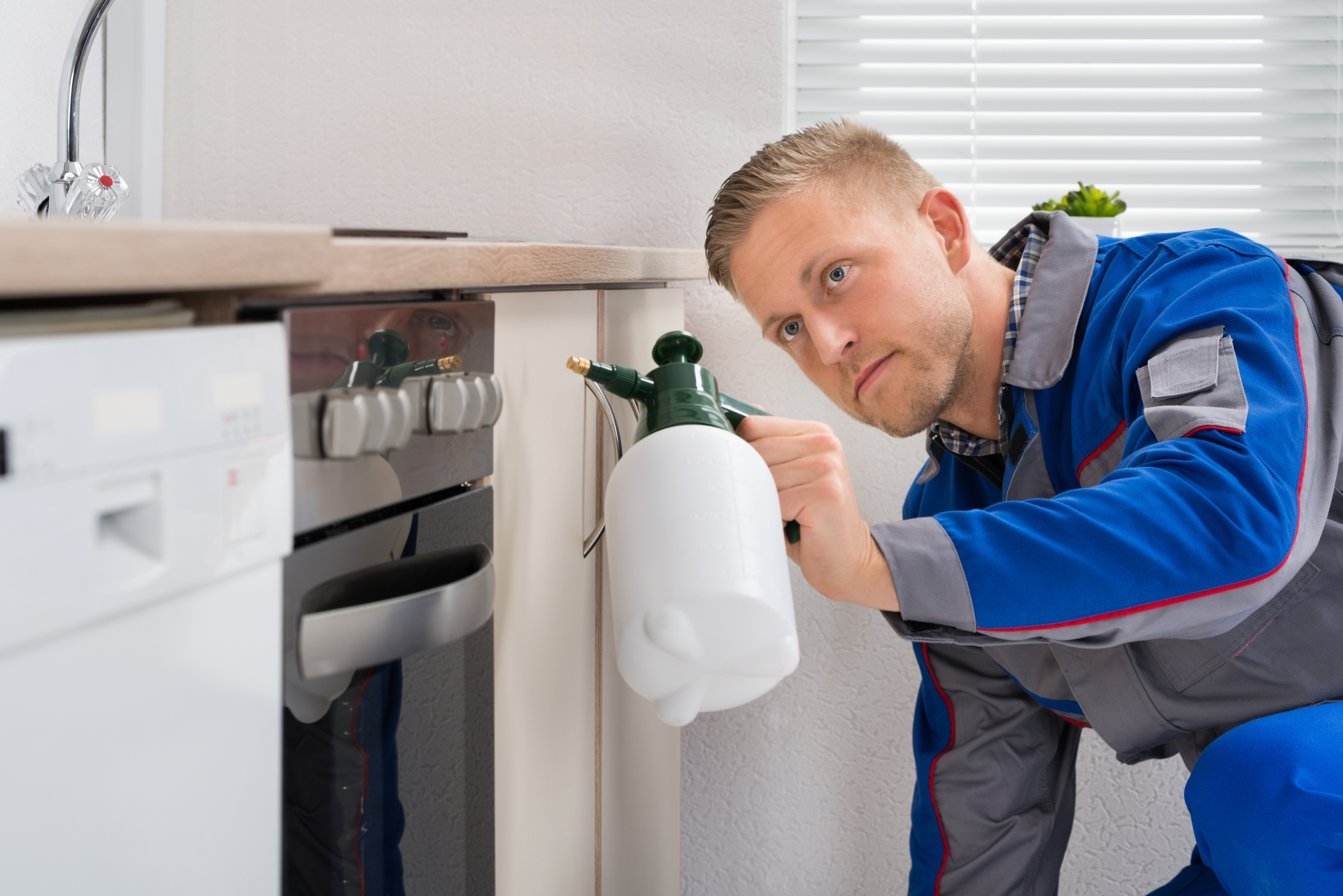 Pest Inspection, Pest Control in Clapham, SW4. Call Now 020 8166 9746