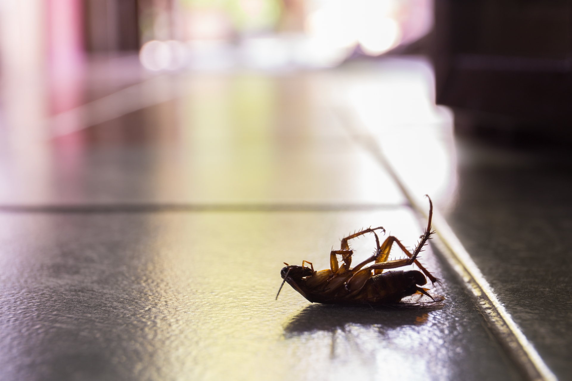 Cockroach Control, Pest Control in Clapham, SW4. Call Now 020 8166 9746